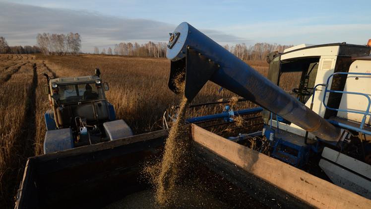 توقعات بوصول محصول الحبوب الروسي هذا العام إلى 104 ملايين طن