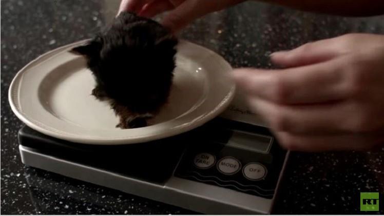 بالفيديو من بريطانيا.. أصغر جرو في العالم