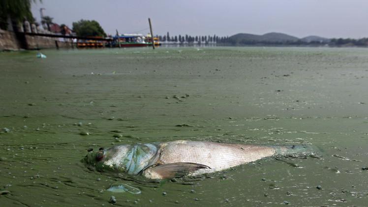 1.5 مليون حيوان  كل عام ضحية للنفايات البلاستيكية في المحيطات