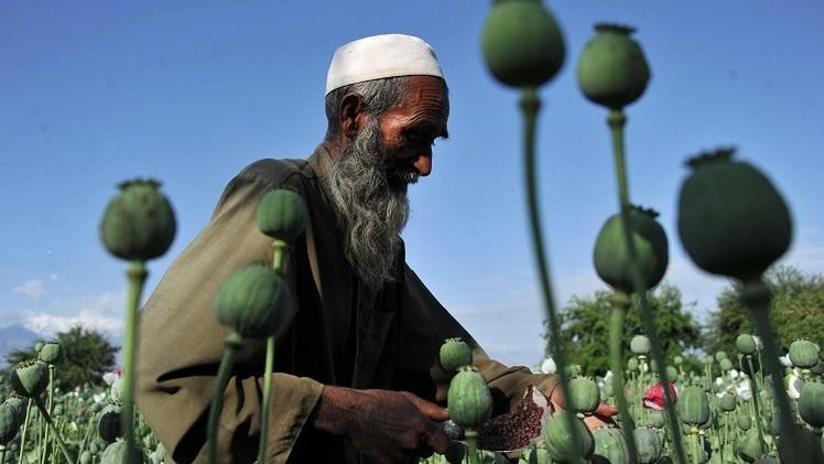 إنتاج الأفيون في أفغانستان يسجل مستوى قياسيا