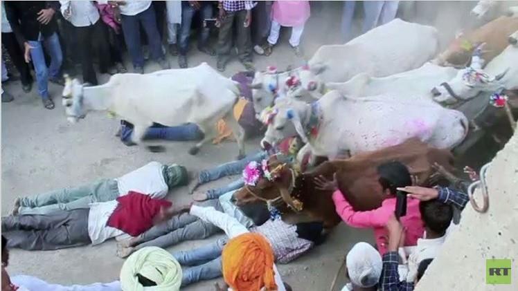 بالفيديو..حوافر أبقار على رجال في عيد ديوالي الهندي