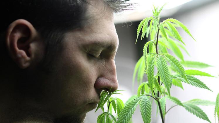 تشريع جديد في واشنطن وولاية أوريغون يجيز حيازة الماريجوانا