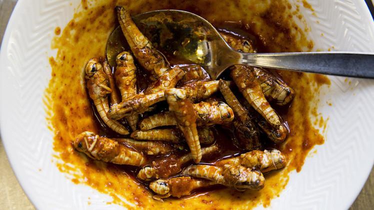 بروكسل...الديدان والحشرات غذاء للطلاب