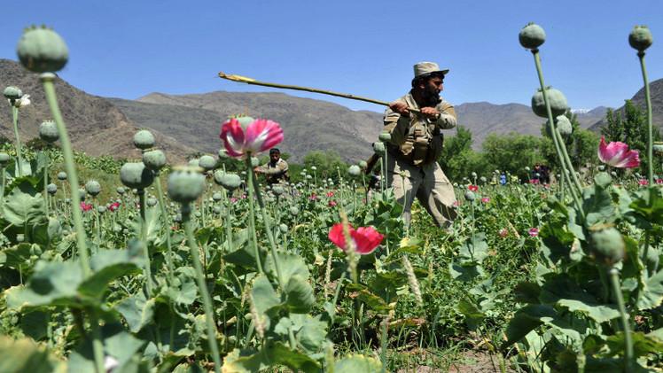 زراعة الخشخاش في أفغانستان سجلت مستوى قياسيا في 2014