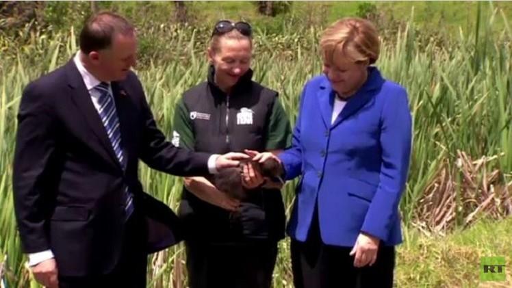 بالفيديو.. ميركل تداعب طائرا فريدا أثناء زيارتها لنيوزيلندا