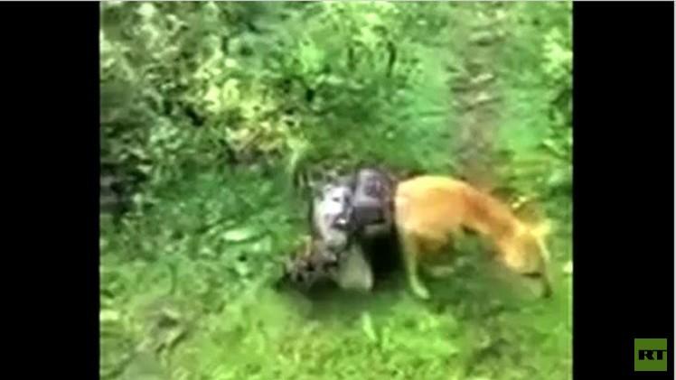 بالفيديو.. كلب يفلت من قبضة ثعبان