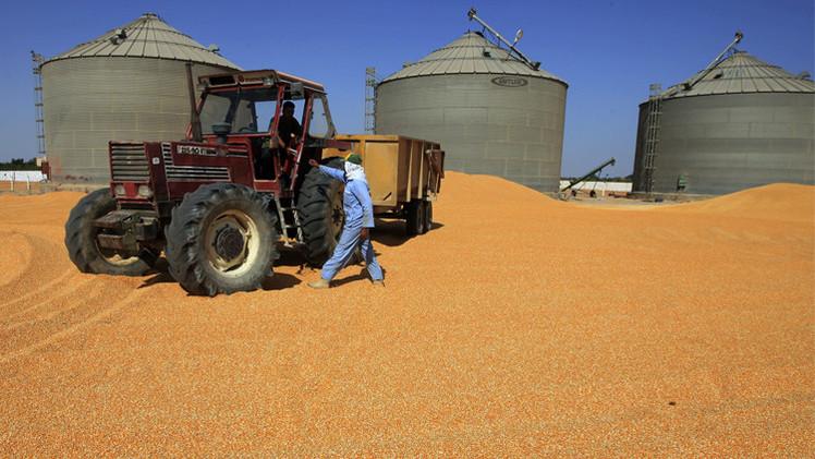 مصر توقع اتفاقا مع السودان لتخزين وتداول مليون طن من الحبوب