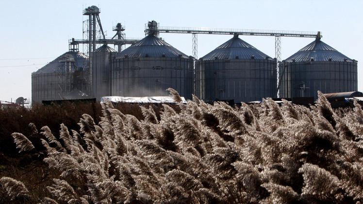 مدفيديف: محصول الحبوب هذا الموسم يضمن أمن روسيا الغذائي