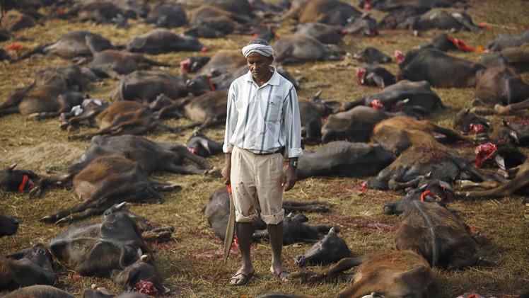 صور صادمة لمهرجان يُضحى فيه بنصف مليون حيوان قرابين لإلهة هندوسية