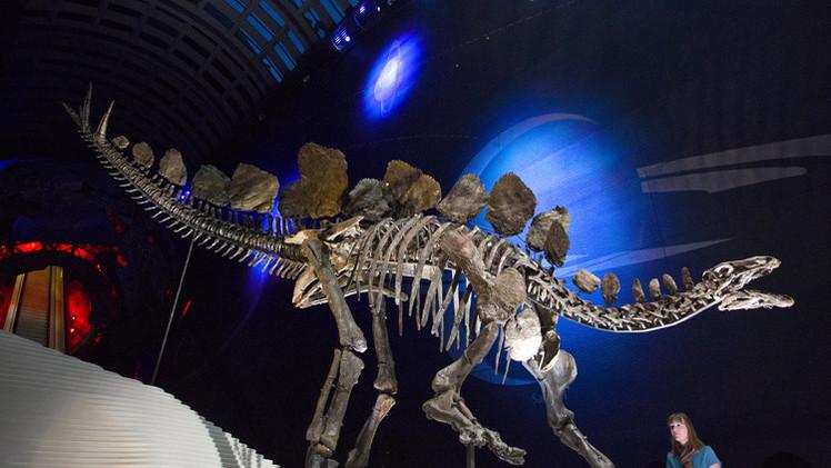 بالصور.. عرض هيكل عظمي نادر لديناصور عمره 150 مليون عام في لندن