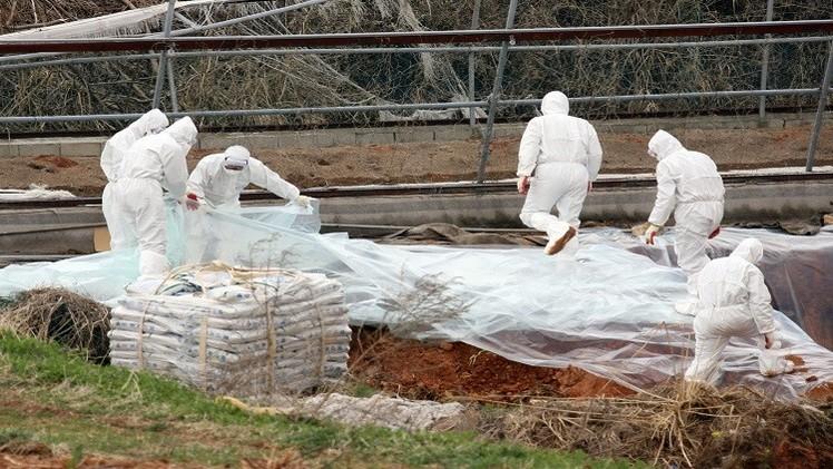إعدام 15 مليون طير داجن في كوريا الجنوبية
