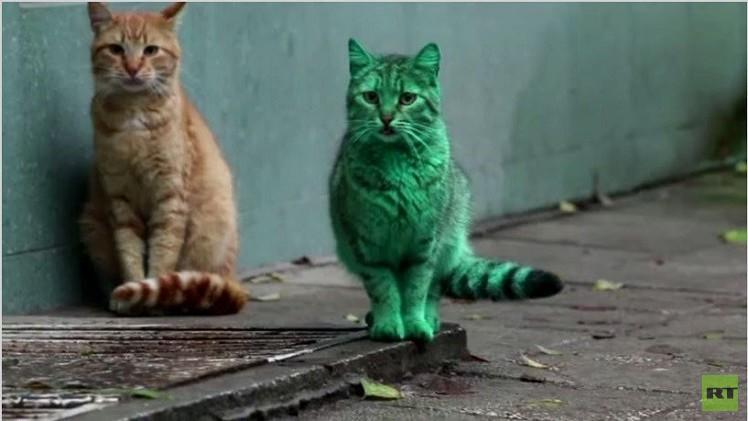 بالفيديو.. قط أخضر زمردي غريب يظهر في شوارع بلغاريا ويصيب الناس بالدهشة