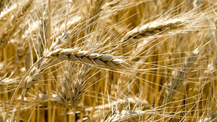 روسيا تفرض حظرا مؤقتا على صادرات الحبوب