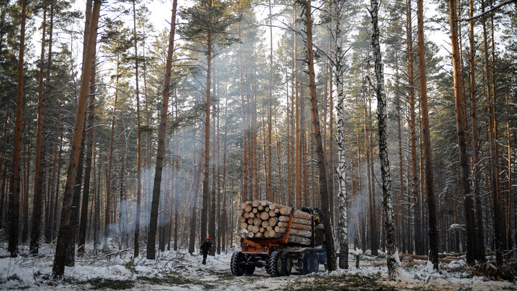 صادرات الأخشاب شكلت 1.4% من إجمالي صادرات روسيا في عام 2013
