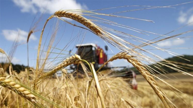 مصر تتوقع تسلم شحنات القمح الروسي في الموعد المحدد