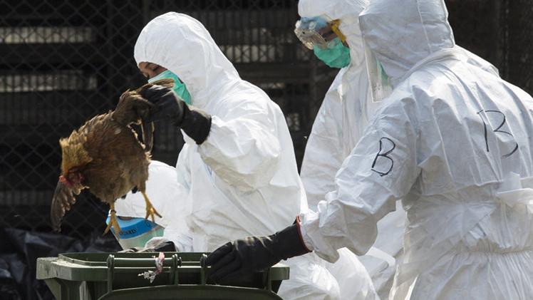 إنفلونزا الطيور في اليابان