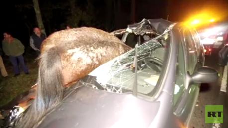 سيارة تصدم حصانا في حادث سير