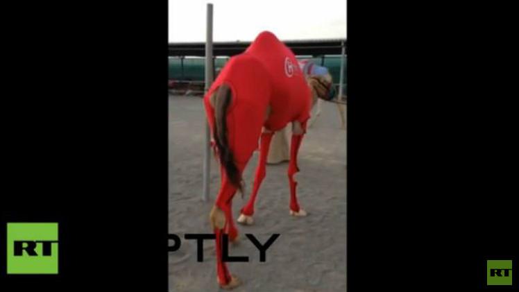بالفيديو...الجمال ترتدي بدلات رياضية خلال المسابقات في الإمارات