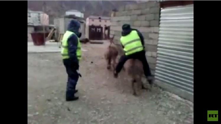 بالفيديو.. لماذا انطلق الحمار حاملا رجل الشرطة ؟