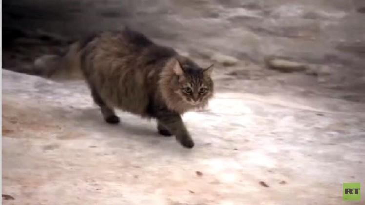روسيا.. قطة تنقذ رضيعاً من البرد القارس