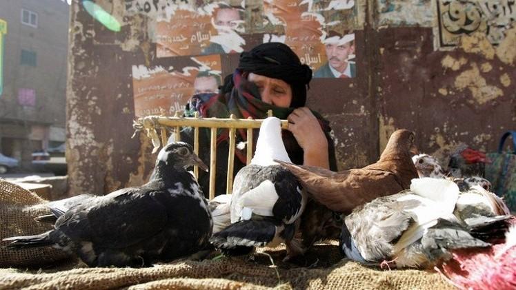 اكتشاف حالات جديدة من انفلونزا الطيور في مصر