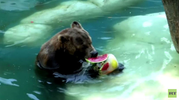 بالفيديو.. نزلاء حديقة الحيوان في ريو دي جانيرو يتناولون الآيس كريم