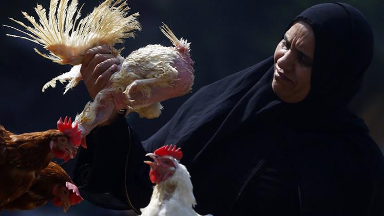 وزارة الصحة المصرية تعلن وفاة شخصين بإنفلونزا الطيور