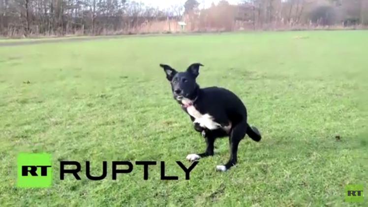 بالفيديو من المملكة المتحدة.. نصف كلب ونصف كنغر