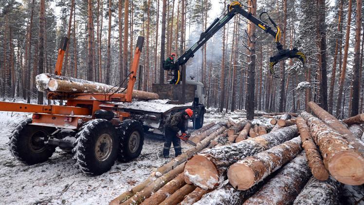 الأخشاب ترفد الميزانية الروسية بـ 370 مليون دولار في 2014