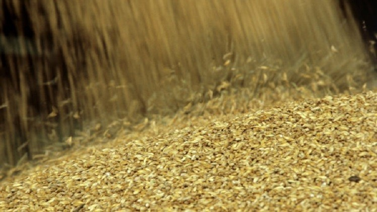 روسيا.. بدء سريان الرسوم الجمركية على صادرات القمح