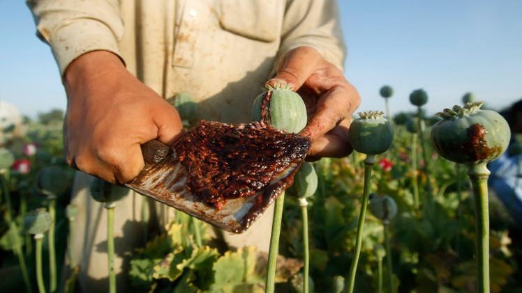 ارتفاع انتاج الأفيون في أفغانستان بنسبة 30%