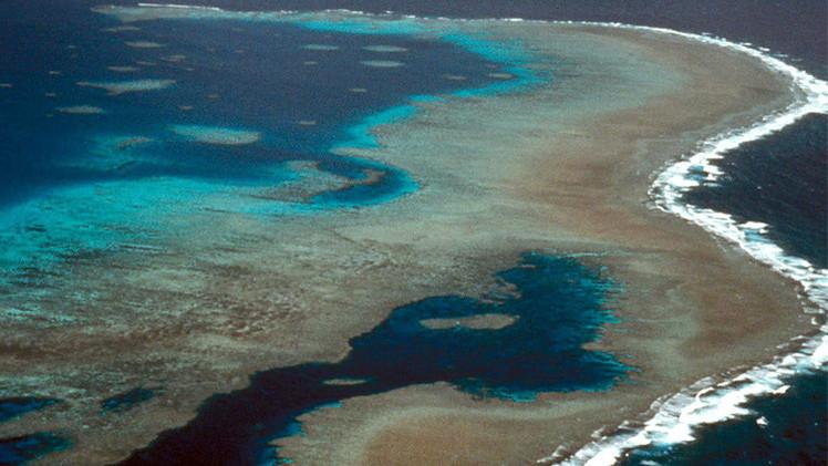 الصندوق الدولي لحماية الطبيعة يحث على حماية الشُعب المرجاني العظيم