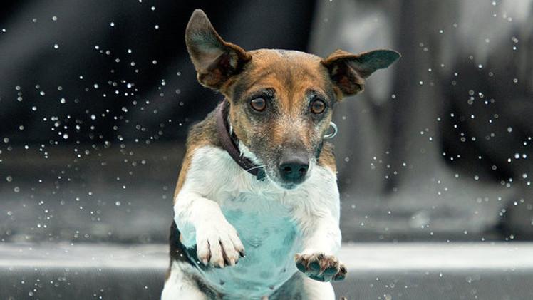 علماء: الكلاب تتمكن من التمييز بين الوجوه الشريرة والخيرة