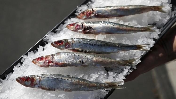 المغرب يطمح للارتقاء بقطاع الصيد البحري