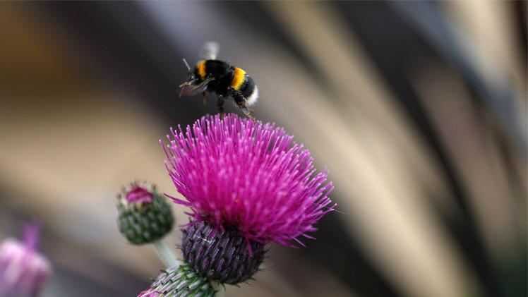 علماء: النحل كالبشر يعاني أحياناً من ذكريات وهمية