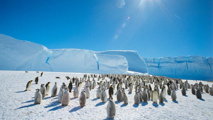 علماء: التغير المناخي ملائم جدا لطيور البطريق