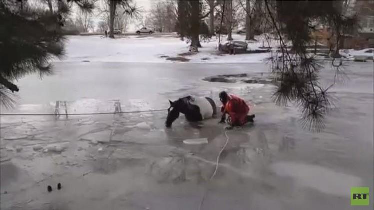 بالفيديو.. انقاذ حصان من بين اثنين سقطا في بحيرة متجمدة