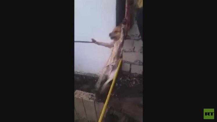 بالفيديو.. انقاذ كلب محاصر باستخدام الصابون