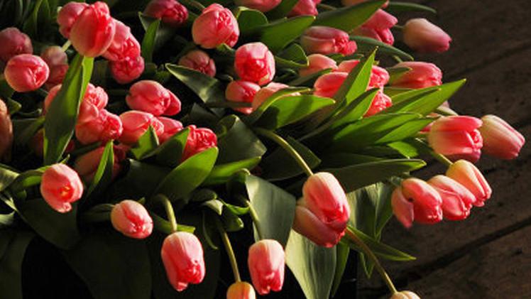روسيا تستعيض عن الورود الأوروبية بالتركية