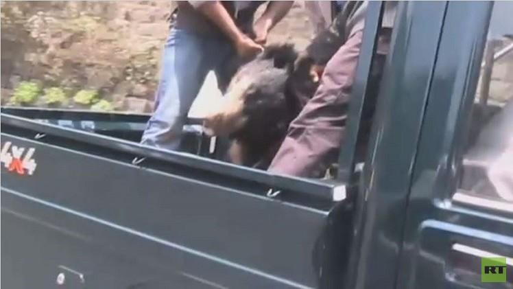 الشرطة الهندية تقتل أحد عناصرها أثناء عملية لمحاصرة دب (فيديو)