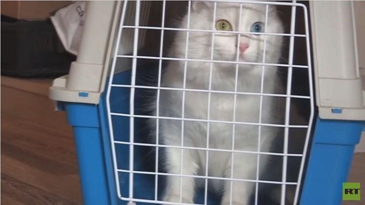 بالفيديو..لاجئة تلتقي مع قطتها بعد شهور فراق