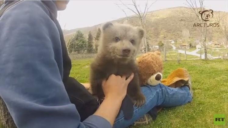 بالفيديو..إليكم صغير الدب مبتسما
