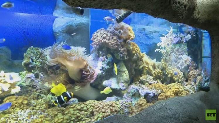حوض الأسماك الملونة في سوتشي