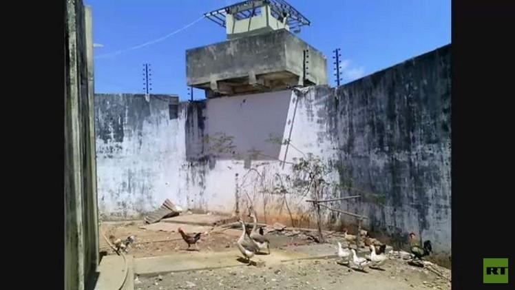 الإوز بدل الضباط لتأمين حراسة السجون في البرازيل (فيديو)