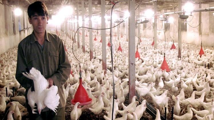 روسيا قد تبدأ باستيراد منتجات الألبان ولحوم الدواجن من إيران