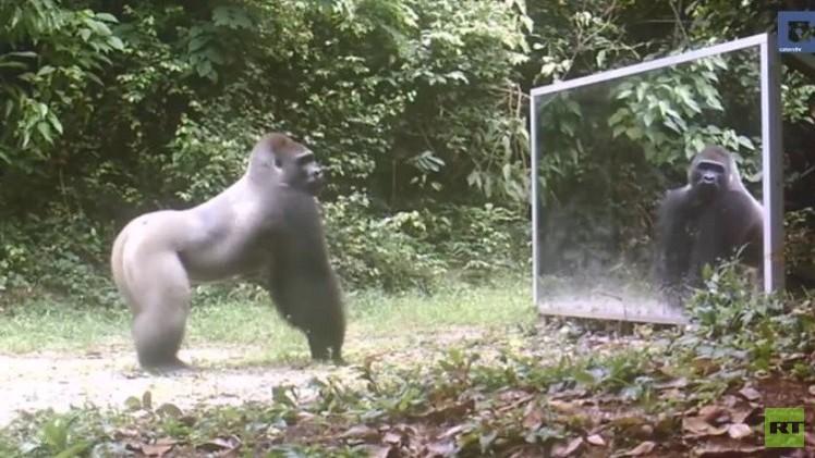تصرف الحيوانات عند رؤيتها نفسها في المرآة  (فيديو)