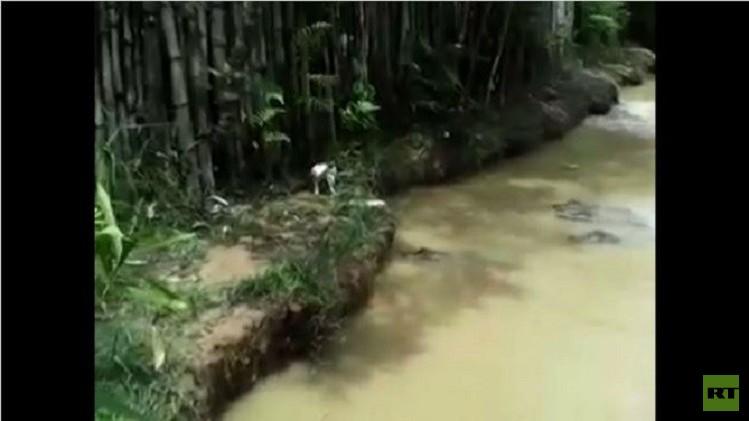 قطة حية يلقى بها إلى التماسيح  لتلتهمها (فيديو)