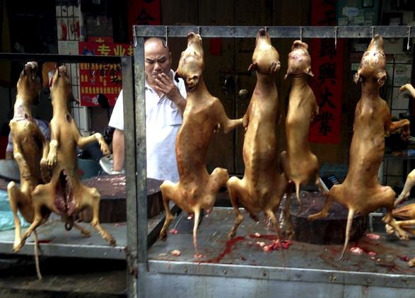 كاميرا خفية ترصد مجازر قتل الكلاب في المهرجان الصيني السنوي بمدينة يولين