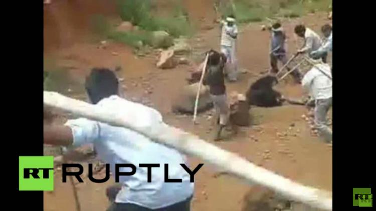العصي تنقذ رجلا هنديا من قبضة دب (فيديو)