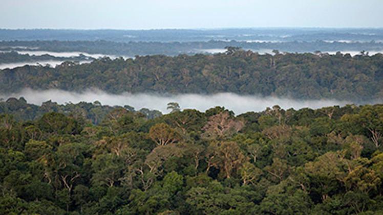 حوض نهر الأمازون كان منطقة مزدهرة سابقا